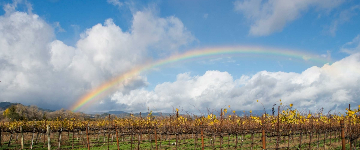 Rainbow Over Ukiah Vineyard